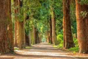YUNABLOG-road