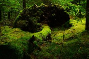YUNABLOG-green